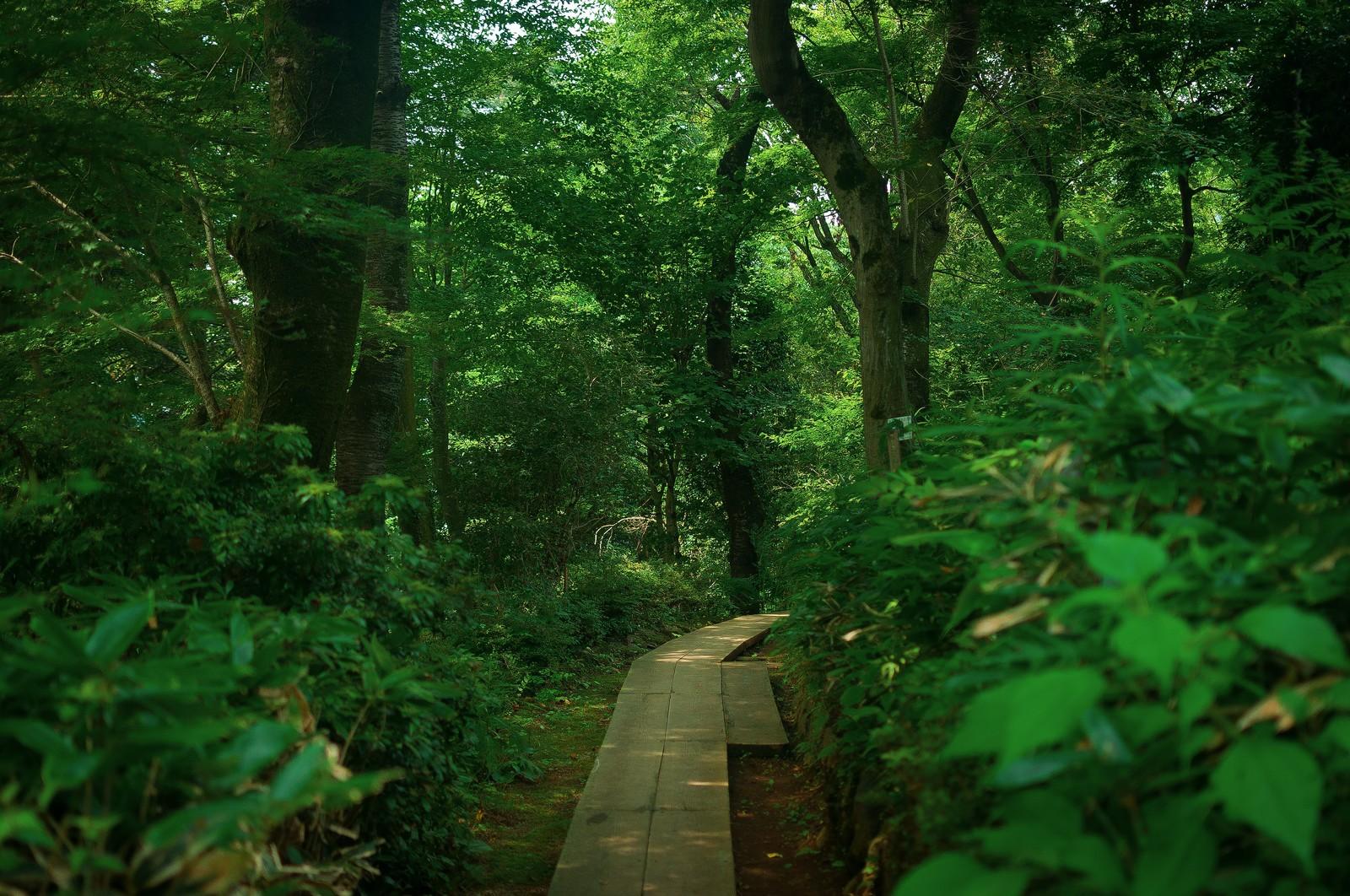 《WMD企画その2》5/27(土)ワールドメラノーマデー:チャリティーハイキング 〜新緑の高尾山を歩こう〜